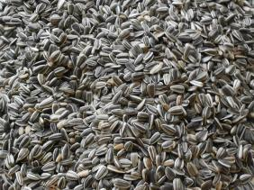 Striped sunflower seeds